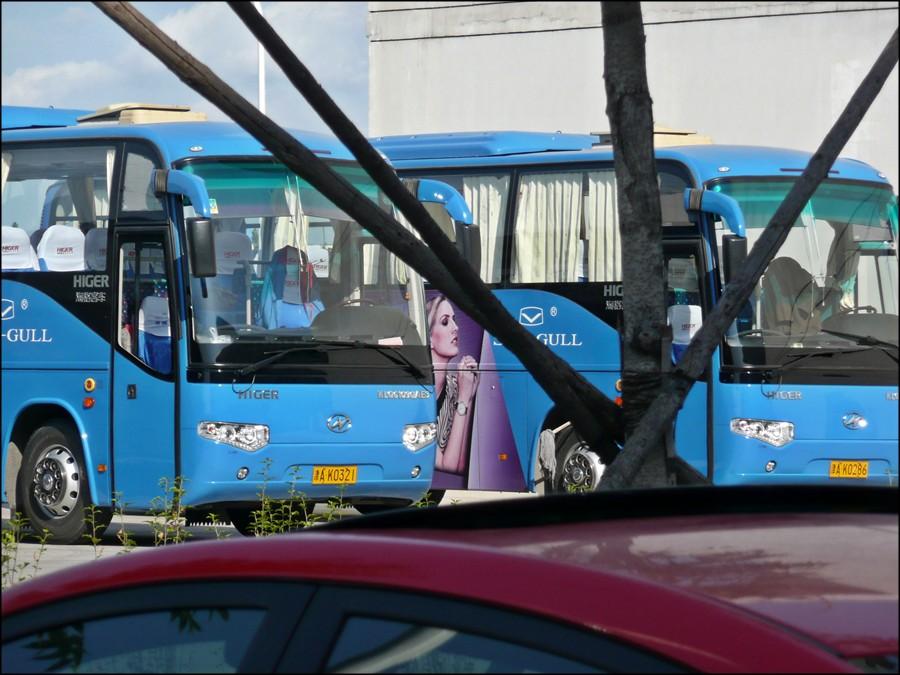 1_seagull_bus_1.jpg